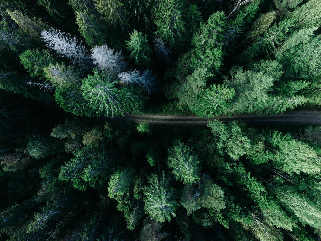 holiday-trees