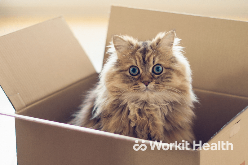 A fluffy cat sitting in a cardboard box