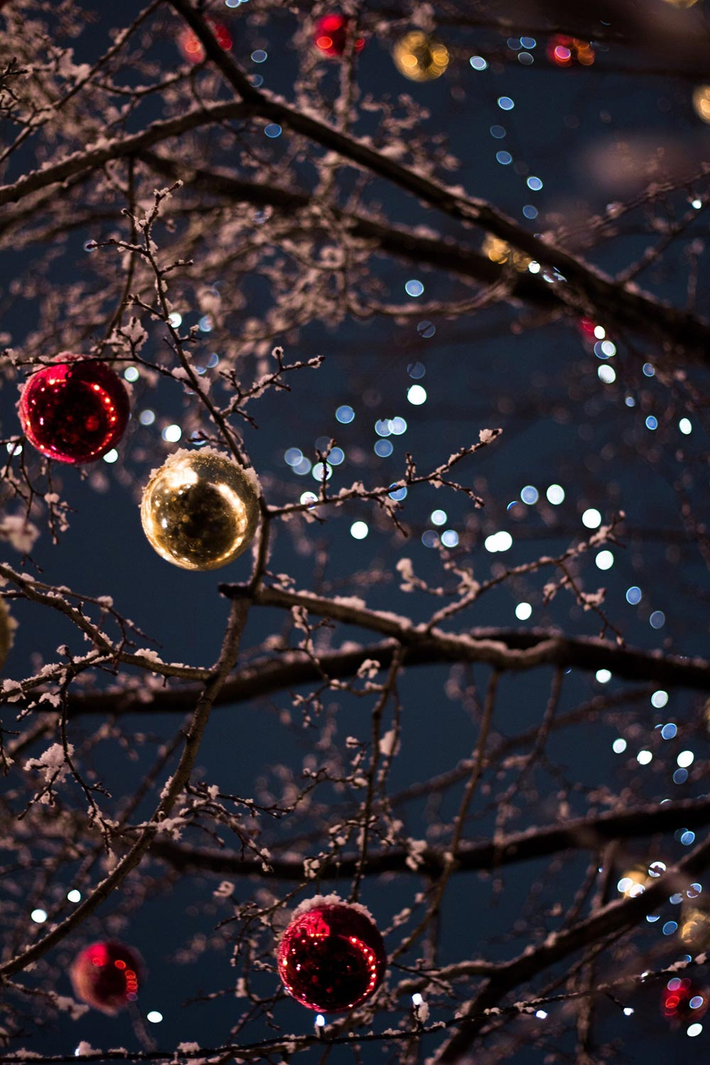 Bare, snowy tree branches decorated with Christmas balls and twinkle lights