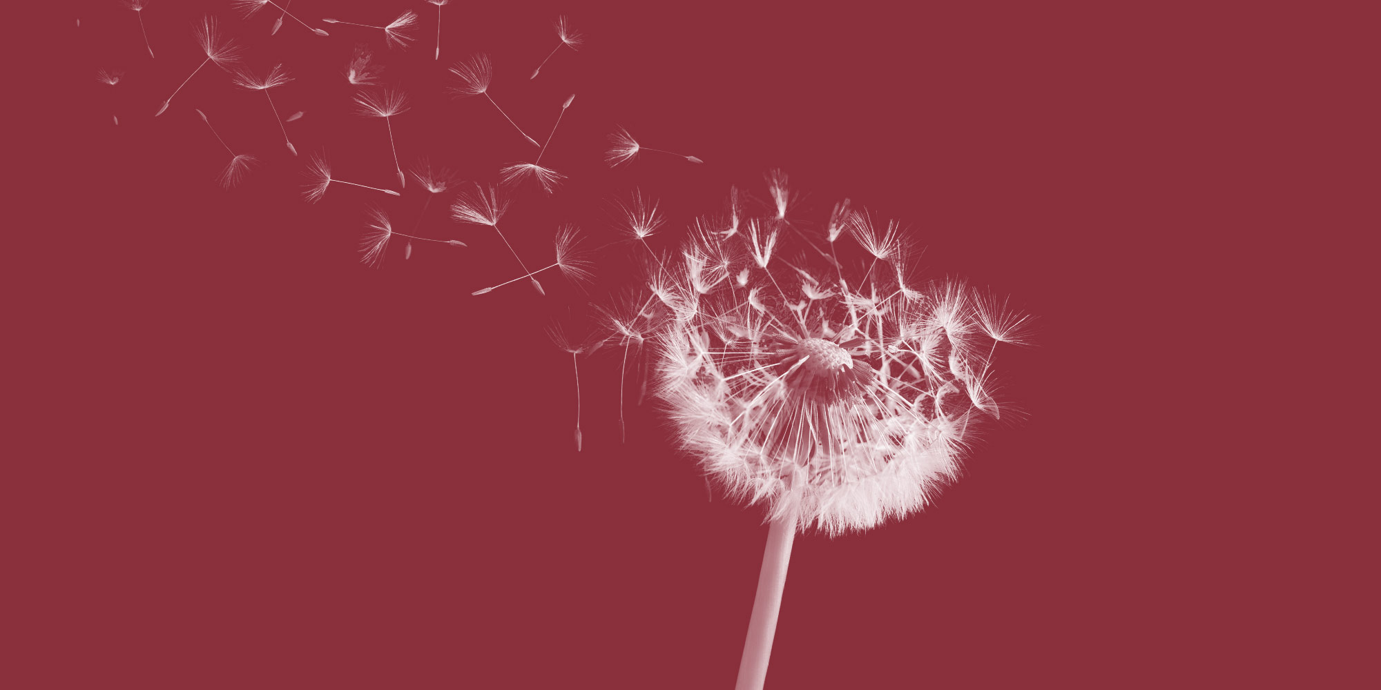 Dandelion fluff blowing. Changes in your first year sober