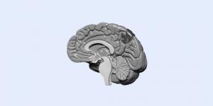 Grayscale illustartion of a brain on a pale blue background. Dopamine Detox Intermediate