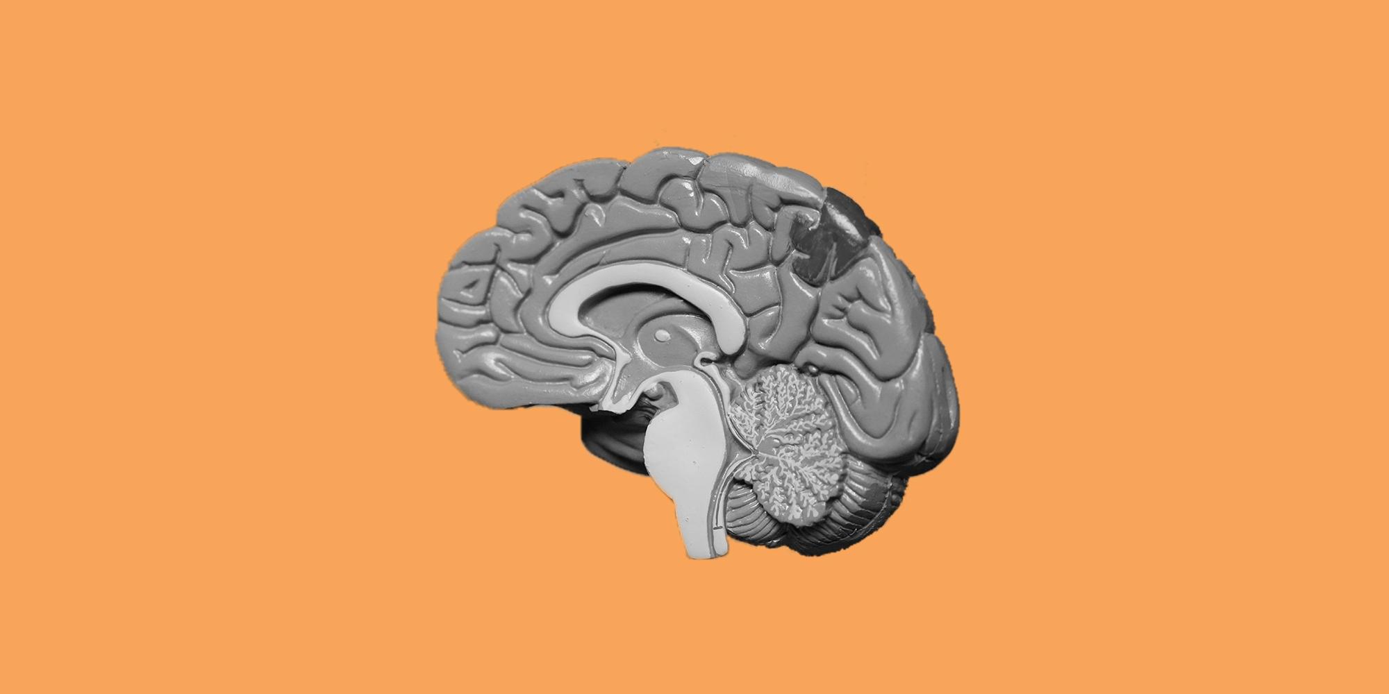 Blog_Brain_4