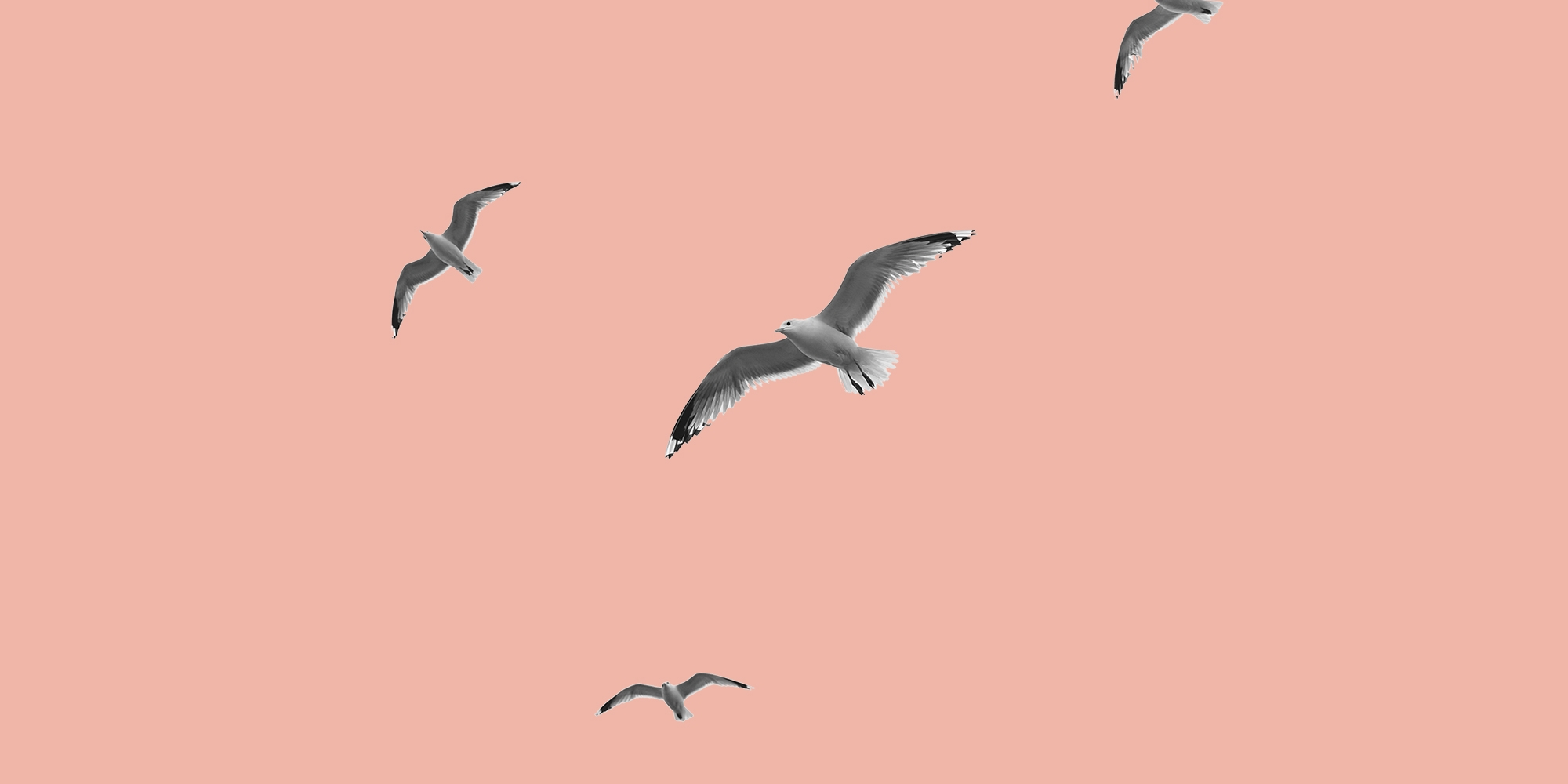 Birds on a peach background. Forgiveness: A key to recovery