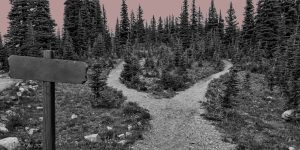 """Paths through the woods. """"Getting sober"""" is not a destination, but a process."""